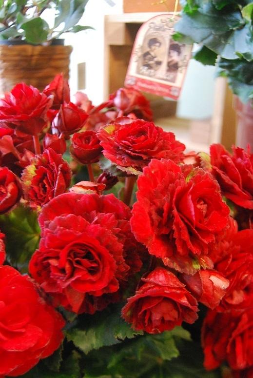 花鉢花苗の入荷。_a0201358_14295488.jpg