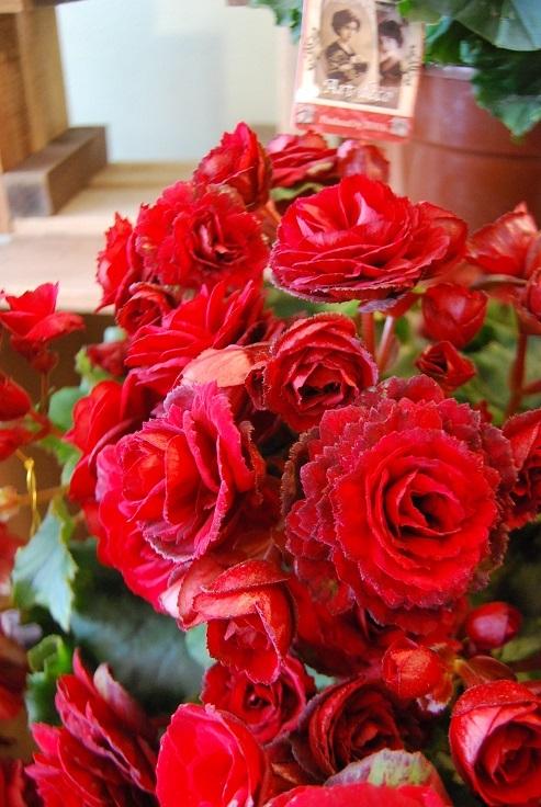 花鉢花苗の入荷。_a0201358_14300539.jpg
