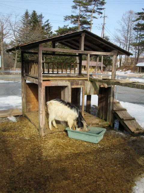 北軽井沢 浅間牧場茶屋 * 冬季メニューで営業中!_f0236260_02315843.jpg