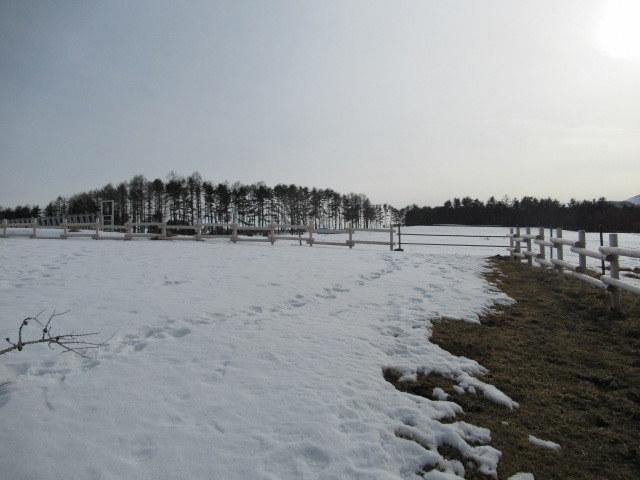北軽井沢・浅間牧場の雪景色_f0236260_18353872.jpg