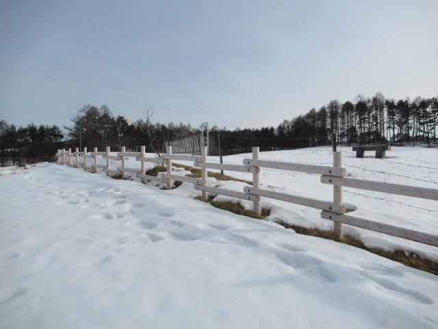 北軽井沢・浅間牧場の雪景色_f0236260_18381099.jpg
