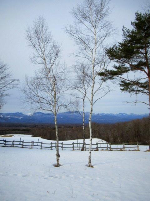 北軽井沢・浅間牧場の雪景色_f0236260_18463569.jpg
