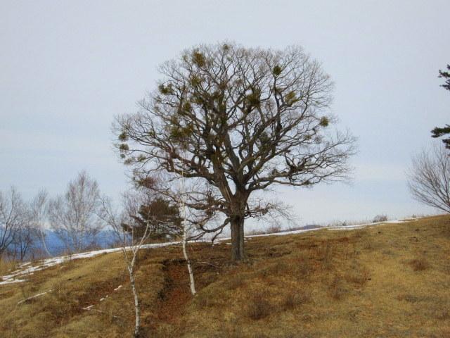 北軽井沢・浅間牧場の雪景色_f0236260_18562117.jpg