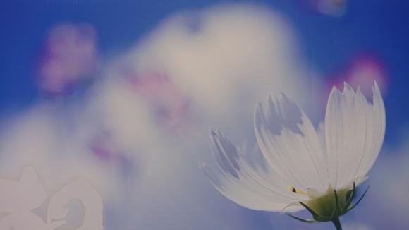 新月に想う、救いの詩***_e0290872_09500078.jpg