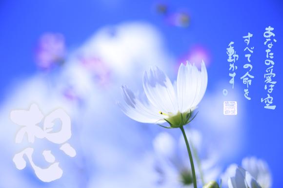 新月に想う、マリアさま no,1***_e0290872_22184626.jpg