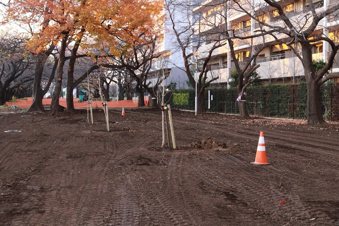 福岡中央公園のクヌギ_a0107574_20055583.jpg
