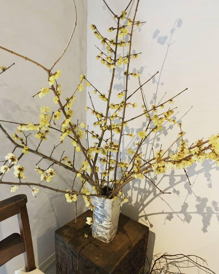 🎍新春🎍 着物を着る会^^ _d0230676_10051409.jpg