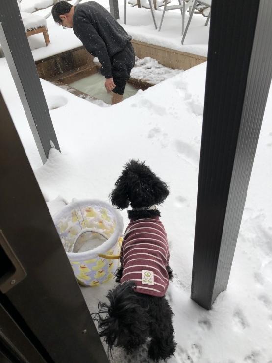 2020年1月26日 雪です_b0098584_12221227.jpeg