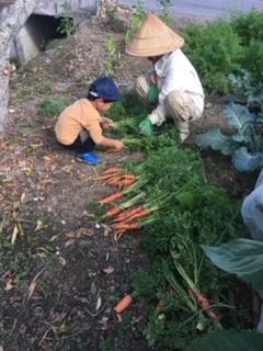 人参収穫_e0158687_07363911.jpg
