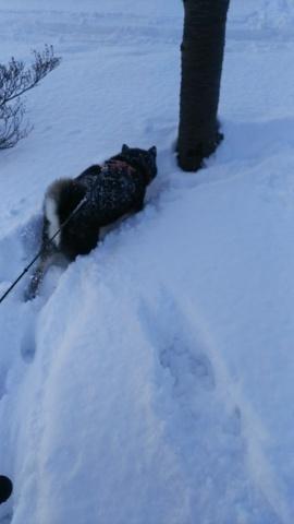 雪・・・降りました_b0343293_21512825.jpg