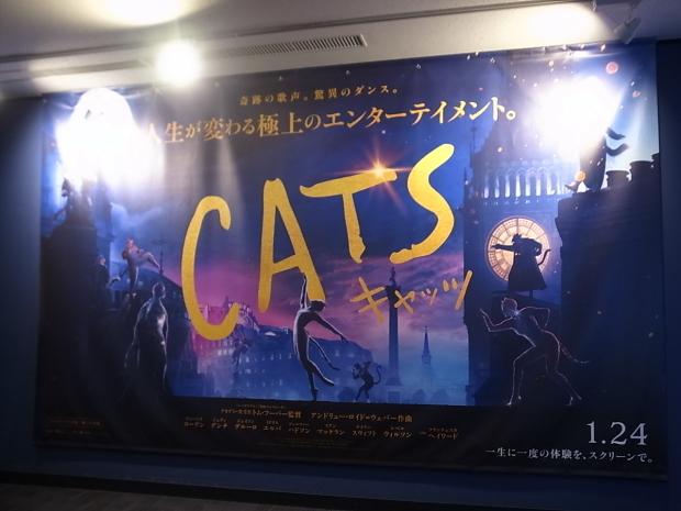 CATS キャッツ_f0197703_19055431.jpg