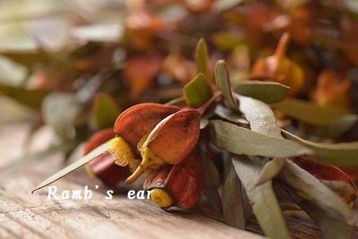 本日のお花♪_e0128909_09405607.jpg
