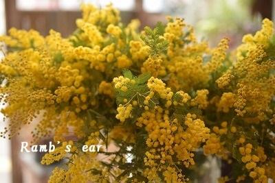 本日のお花♪_e0128909_09441819.jpg