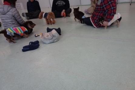 1月26日(日)ドッグランのお友達とドッグフードに付いて_f0170713_11183013.jpg