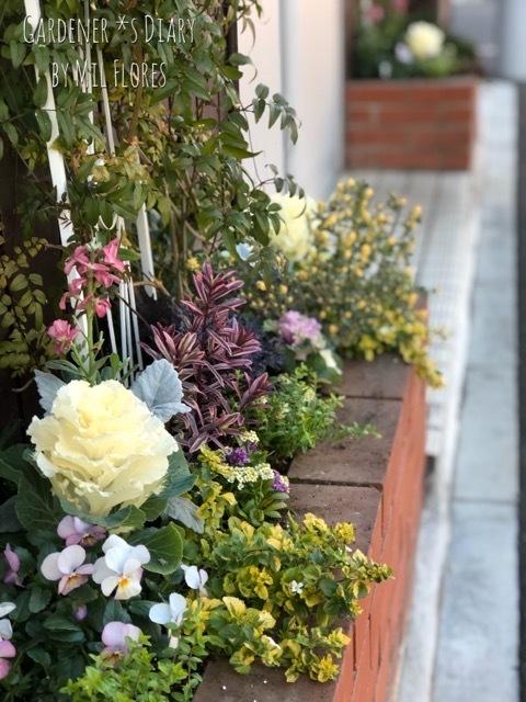暖冬の花壇_e0365614_15262351.jpg