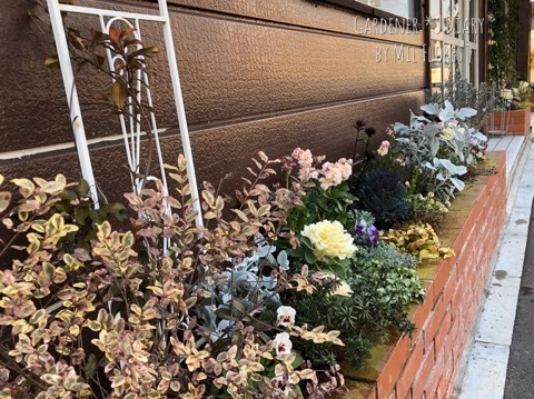暖冬の花壇_e0365614_15282792.jpg