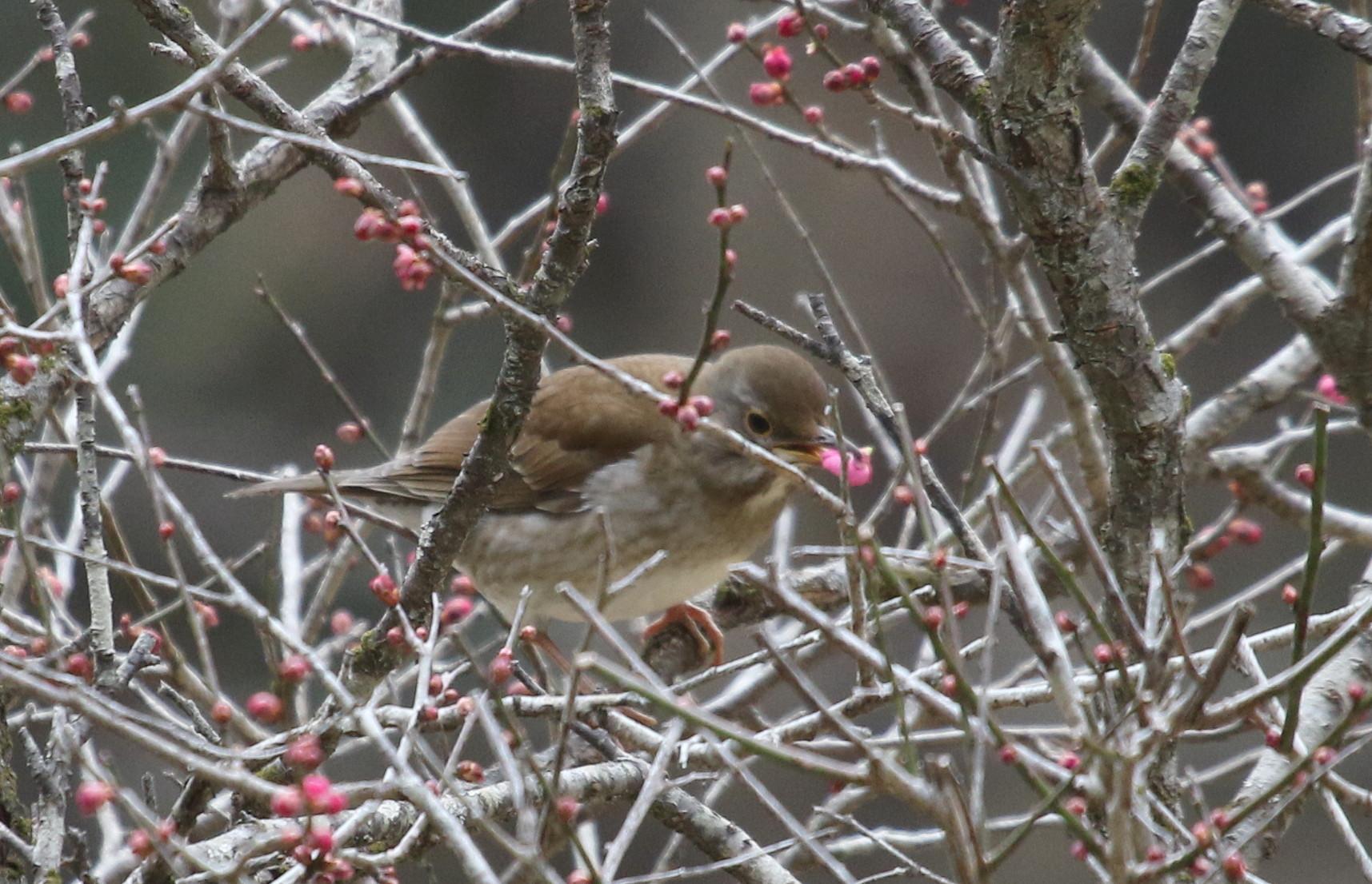 里山での探鳥で出会えた鳥たち(キセキレイ&ミソサザイ)_f0239515_16273824.jpg