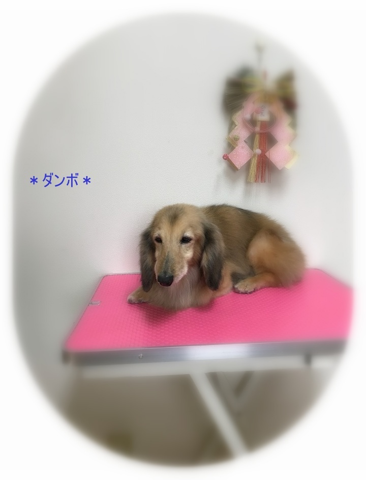 ダンボくん_a0315823_20002629.jpg