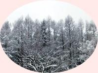 🎵 チェジュの冬 🎵_a0115924_21292676.jpg