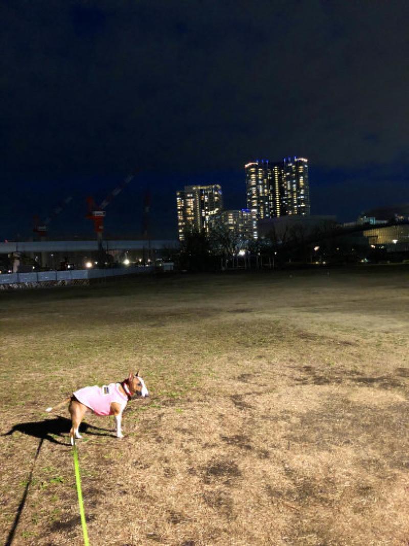 夜散歩の後は_b0310424_16391958.jpg