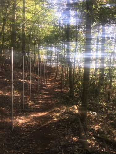 森、ふたたび。_e0295926_10120557.jpg
