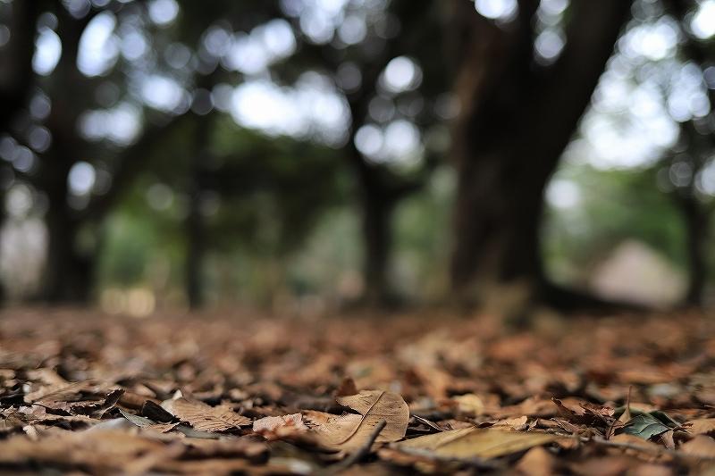 【永遠のソール・ライター展】【代々木公園】_f0348831_17433062.jpg