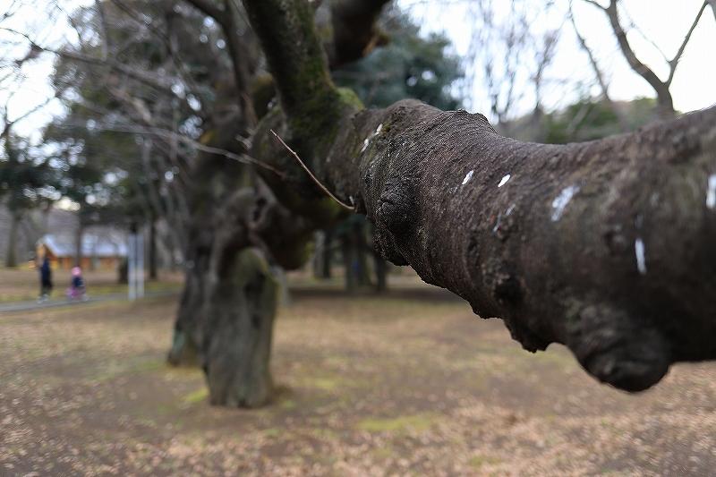 【永遠のソール・ライター展】【代々木公園】_f0348831_17433723.jpg