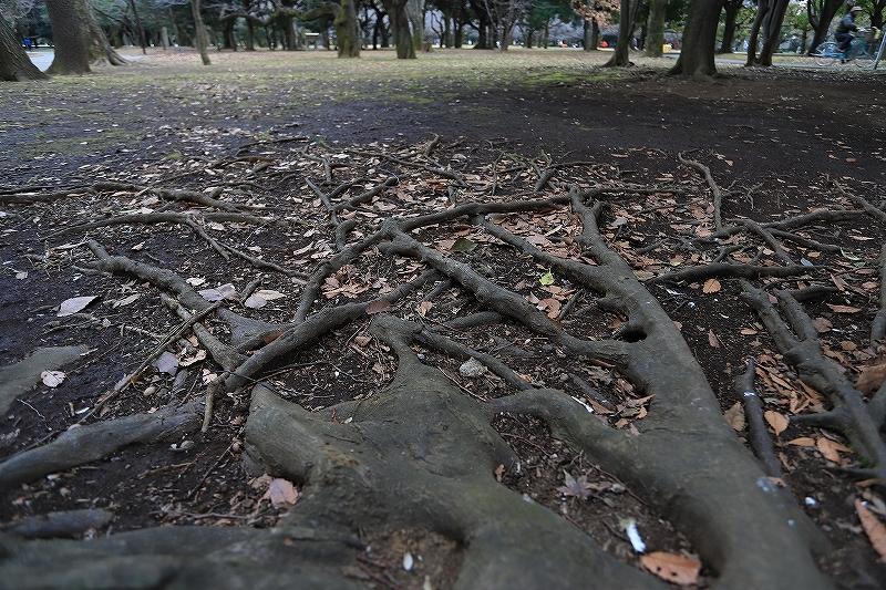 【永遠のソール・ライター展】【代々木公園】_f0348831_17433744.jpg