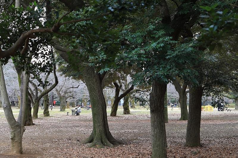 【永遠のソール・ライター展】【代々木公園】_f0348831_17433768.jpg