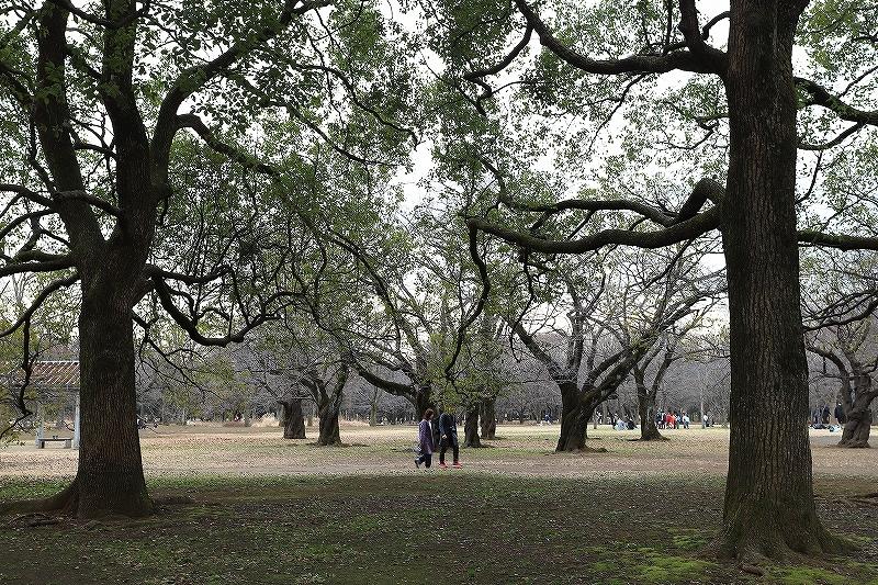 【永遠のソール・ライター展】【代々木公園】_f0348831_17434738.jpg