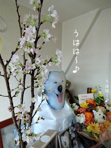 うれしいお花_c0062832_14333326.jpg