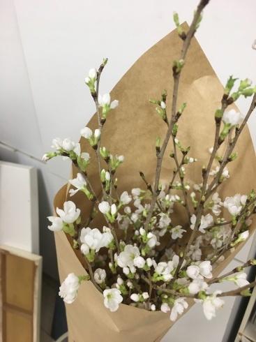 桜。_c0160745_11361267.jpeg