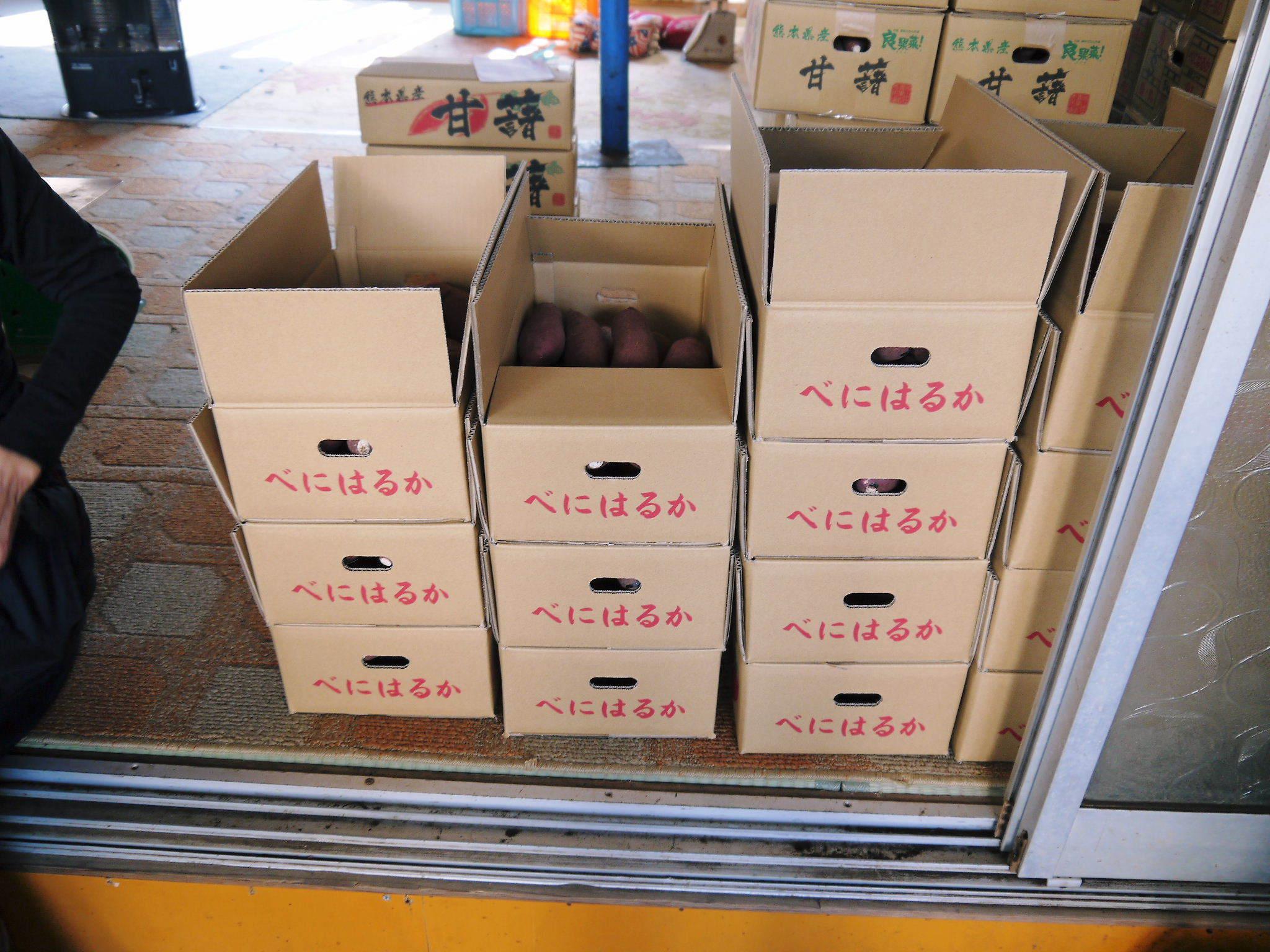 熊本産大津甘藷『からいも(サツマイモ)』の販売に向け、生産農家を現地取材(前編)_a0254656_17402695.jpg