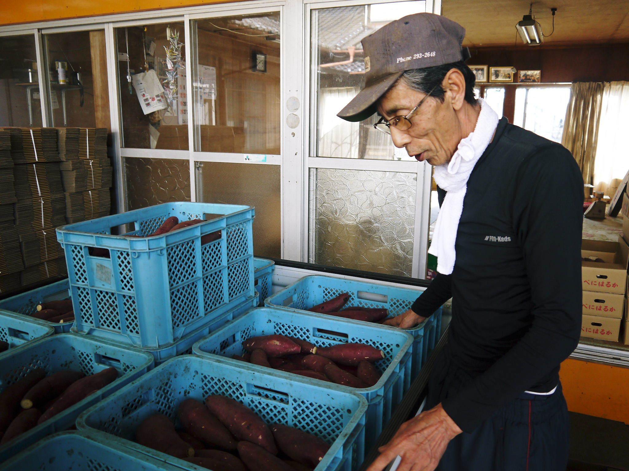 熊本産大津甘藷『からいも(サツマイモ)』の販売に向け、生産農家を現地取材(前編)_a0254656_18441745.jpg