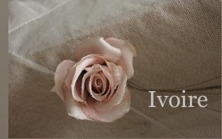 お手本のバラ...♪*゚_f0372557_15092078.jpeg