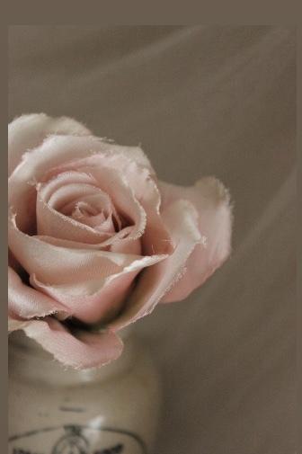 お手本のバラ...♪*゚_f0372557_15110076.jpeg