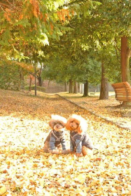 秋色散歩_d0160960_17482488.jpg