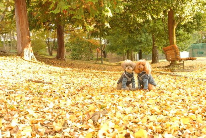 秋色散歩_d0160960_17585716.jpg