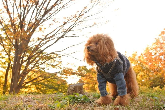 秋色散歩_d0160960_18013040.jpg