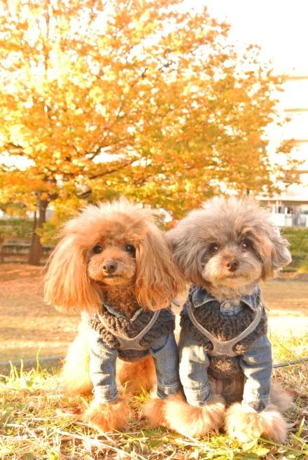 秋色散歩_d0160960_18033474.jpg