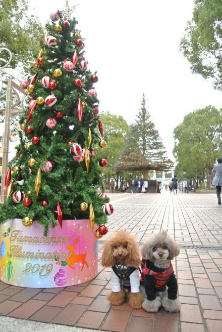 クリスマスを求めて出会ったのは・・・_d0160960_19031662.jpg