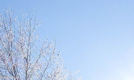 凍り付く枝と草、そして山並み~1月の美瑛_d0340565_20161959.jpg