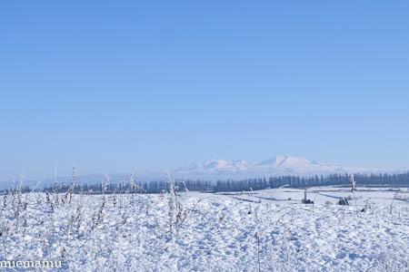 凍り付く枝と草、そして山並み~1月の美瑛_d0340565_20214137.jpg