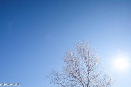 凍り付く枝と草、そして山並み~1月の美瑛_d0340565_20222281.jpg