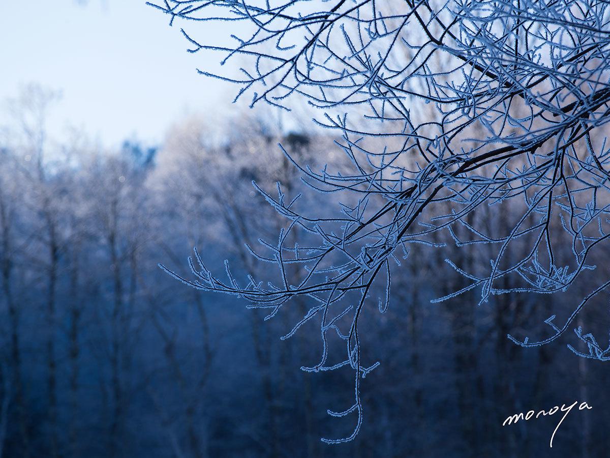 霧氷樹_c0085877_06202152.jpg