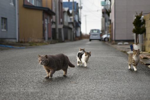 灯台猫たち2020.01.17(1)_e0414191_06175622.jpg