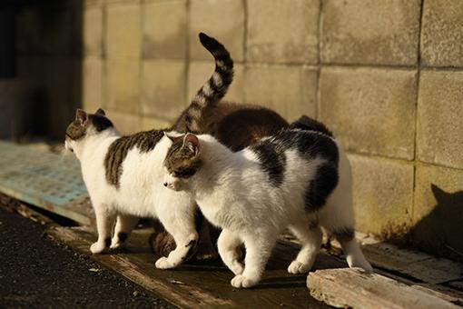 灯台猫たち2020.01.17(1)_e0414191_06180138.jpg
