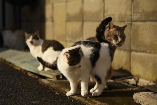 灯台猫たち2020.01.17(1)_e0414191_06180733.jpg
