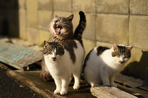 灯台猫たち2020.01.17(1)_e0414191_06181352.jpg