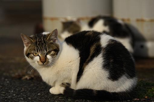 灯台猫たち2020.01.17(1)_e0414191_06182014.jpg